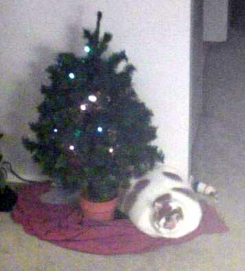 Christmas with the Tub!