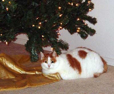 The Christmas Tub