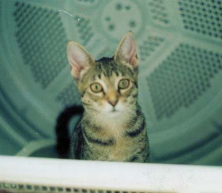 Xev sitting in the clothes dryer